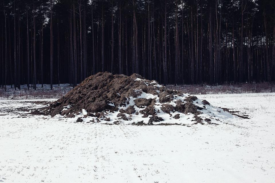 Dung-vor-dem-Wald_neu_web
