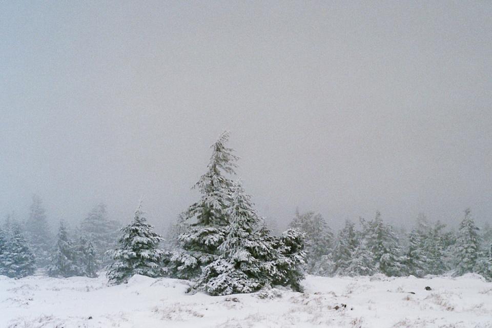 2015-01-Harz-(1)_bea_web