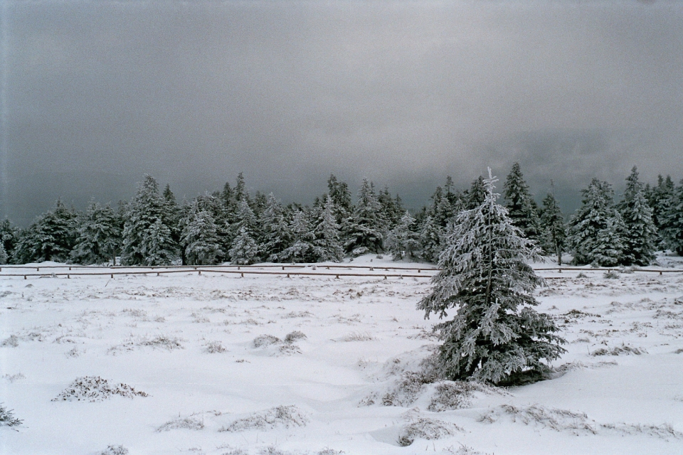 2015-01 Harz (3)_bea