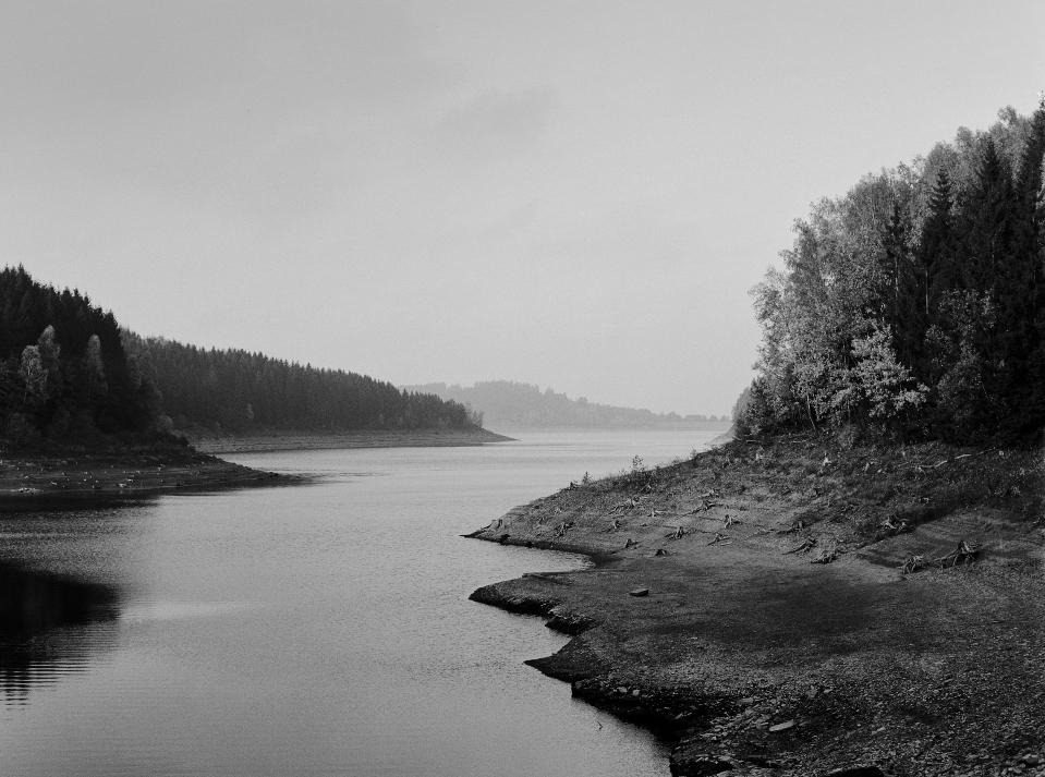 INTOTHEWALD-Wald